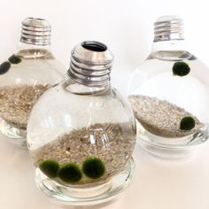 Looking for a low-maintenace plant pet? Try a cute marimo moss ball. Disclaimer, the ball is really green algae. - The Sill, www.thesill.com