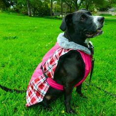 Hunter Green All Sizes Weatherbeeta Dry Dog Bag Unisex Pet Accessory Jacket