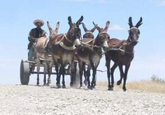 Donkeycart on gravel road - Land Of The Brave, Horse Wagon, The Donkey, Pictures To Paint, Farm Animals, Painted Rocks, Creatures, Donkeys, Horses