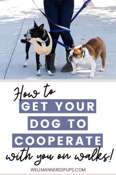 Dog walking tips and tricks to get your dog to cooperate with you on walks.