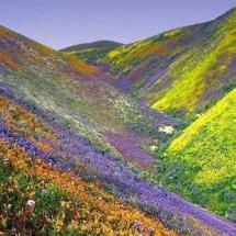 Valley of Flowers, Uttarakhand - The phrase 'A thing of beauty is a joy forever' comes alive here. The beauty of Valley of Flowers has to be seen to be believed. All Nature, Amazing Nature, Nature View, Parc National, National Parks, Places Around The World, Around The Worlds, Beautiful World, Beautiful Places