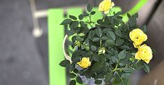 Nem kell permetezni! Pofonegyszerű módszer, hogy megvédd a növényeidet a kártevőktől - www.kiskegyed.hu