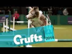 ▶ Agility at Crufts 2014 Teaser | Crufts - YouTube
