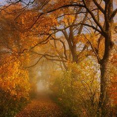 abundance of autumn II by Sebastian Luczywo, via 500px