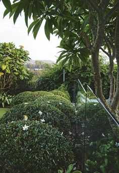This garden combines old-world charm with a subtropical flair. Catering to two very active kids, this already-established garden with a sense of old-world charm is reworked to become a functional family space. Plant Design, Garden Design, Villa Plan, Contemporary Garden, Shade Garden, Garden Plants, Old World Charm, Landscaping Plants, Tropical Garden