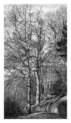 New edition Woodland Walk print 25 cm x 45 cm — Sarah Woolfenden Tree Drawings Pencil, Ink Pen Drawings, Pencil Art, Landscape Drawings, Landscape Art, Tree Sketches, Gravure, Illustrations, White Art