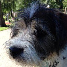 heididahlsveen:  #atsjoo #hund #dog