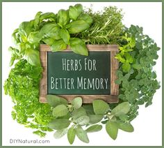Herbs for Memory Including Rosemary Sage Ginkgo & Others!