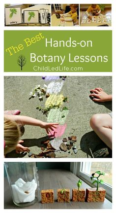 Hands on lessons for exploring botany on ChildLedLife.com