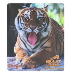 Mouse Pad - Tiger Photo