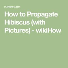 How to Propagate Hibiscus (with Pictures) - wikiHow