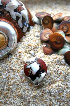 Shells are a treasure of the beach. 'Tween Waters' beaches have treasures that stretch for miles.  http://www.tween-waters.com/