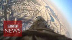 Eagle-cam reveals incredible POV as it descends from Burj Khalifa - BBC ...