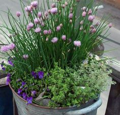 Chives. Plant Mary's into containers and in the front of LPB or on the South side of house.