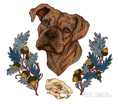 Hanna // #boxer #squirrel #skull #acorn #oak #dog #portrait