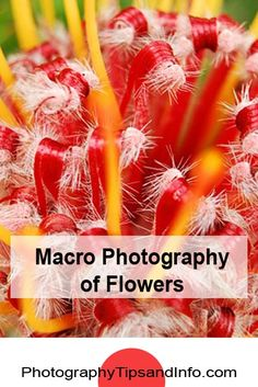 great tips on taking Macro Photographs of flowers in a garden.