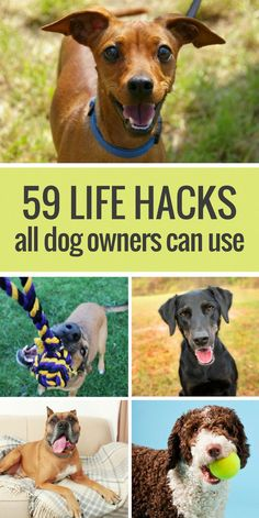 Here's 59 simple life hacks for dog owners. From cleaning up dog hair with rubbe. Here's 59 simple life hacks for dog owners. From cleaning up dog hair with rubbe… , Here's 59 Dog Care Tips, Pet Care, Pet Tips, Rottweiler, 1000 Lifehacks, Dog Boarding Near Me, Up Dog, Dog Insurance, Dog Hacks
