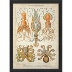Create an intriguing focal point in the study or complete a coastal look in the den with this framed giclee print, showcasing a squid and octopus design.