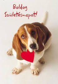 boldog születésnapot Beagle, Happy Birthday, Greeting Cards, Cake Flowers, Facebook, Happy Brithday, Beagle Hound, Urari La Multi Ani, Happy Birthday Funny