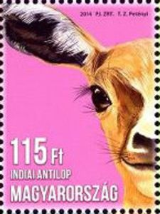 Native Indian, Stamp Collecting, Postage Stamps, Children, Animals, Wildlife, Painting, Collection, World