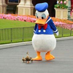 Pato Donald e uma linha família de patinhos...