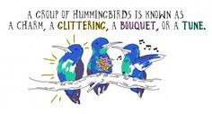 Delightful Ways We Refer to Groups of Animals in English: A group of hummingbirds is known as a charm, a glittering, a bouquet, or a tune.