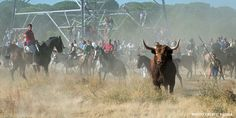 Sign the petition! - Spanish Politicians: Ban Cruel Bull Fiestas