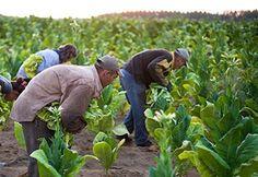 agrotikanew : Απλήρωτοι 3 έτη δικαιούχοι αμειψισποράς με ξηρικές...