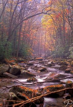 Great Smoky Mountains National Park. Gatlinburg, TN.
