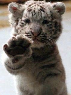 Awwwwwwwwwwwww adorable