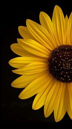 Did you hear all this buzz about sunflower lecithin in the supplement industry? If so, then, sunflower lecithin benefits are somethi. Sunflower Pictures, Sunflower Art, Sunflower Garden, Sunflower Fields, Flower Phone Wallpaper, Cellphone Wallpaper, 3d Wallpaper For Iphone, Emoji Wallpaper, Mobile Wallpaper