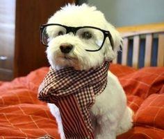 nerd~!