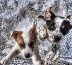 Canon 70d , happy puppies