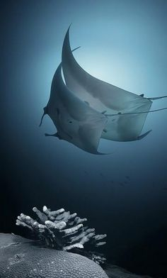 This is the real dancing with the stars! http://media-cache4.pinterest.com/upload/115686284148138905_jgK0vdqR_f.jpg lkmark underwater oceans of the world