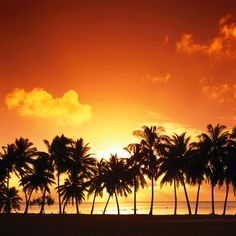 Google Image Result for http://www.ipad-wallpapers.us/bgs/palm-trees-sunset-ipad-wallpaper.jpg