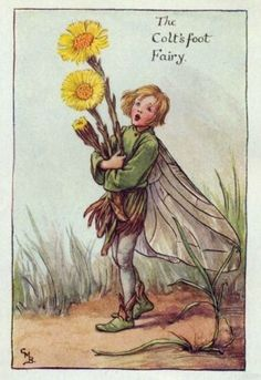 Coltsfoot Flower Fairy Print c.1927 Fairies by Cicely Mary Barker