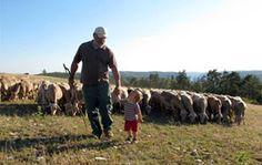 Les éleveurs de brebis