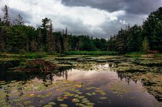 The Swamp by Lee Bodson on River, Mountains, Nature, Outdoor, Outdoors, Naturaleza, Rivers, Outdoor Games, Off Grid