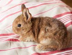 Billedresultat for kaninunger