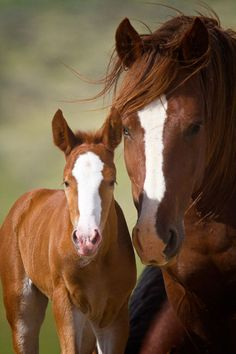 Mare and foal. The mare is pretty.