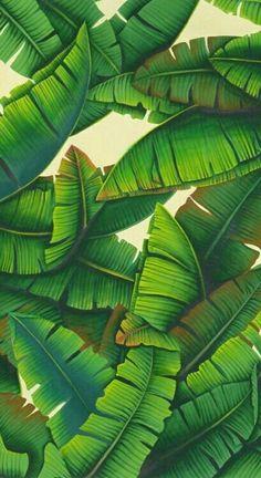 Palm Leaf Wallpaper Spotti StudioPepe Green Jungle Wallpaper