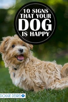 Wondering if your dog is happy? Here's 10 signs that your dog is happy! >> doggiedesires.com...