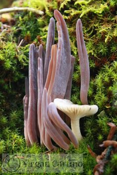 The fungus among us (lens, pictures, photos, attachment)