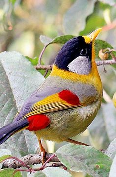 Amazing Colorful Bird