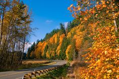 Fall colors at Milepost 58 by James Wengler, Port Angeles Western Washington, Washington State, Neah Bay, Port Angeles, Olympic Peninsula, Pacific Coast, Photo Contest, Olympics, Westerns