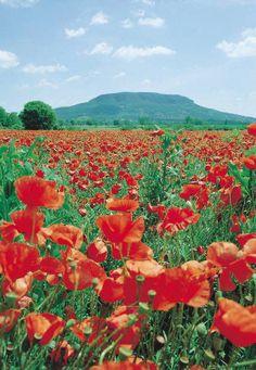 Badacsony, Hungary Hetalia, Where To Go, Budapest, Finland, Flower Power, Norway, Germany, Around The Worlds, Mountains