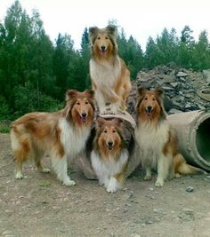 collie clan