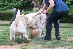 Ein Horrorszenario - der eigene Hund wird angegriffen. Wie verhalte ich mich richtig, wenn der geliebte Vierbeiner von einem anderen Hund attackiert wird? Hier mehr dazu