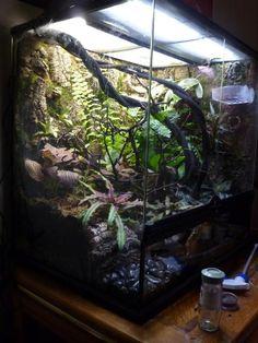 38 Best Exo Terra Images Reptile Cage Terrarium Ideas Reptile