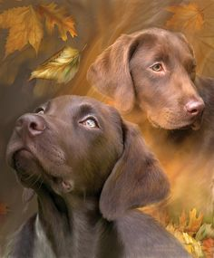 Labrador Retriever Chocolate Lab by Carol Cavalaris. Prints available at Fine Art America. This painting of a chocolate Labrador Retriever, reflecting the colors of Autumn, is from the Dogs Labrador Retrievers, Retriever Dog, Animals And Pets, Cute Animals, 1 Gif, Tier Fotos, Dog Paintings, Autumn Art, Fauna